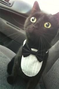 Кот ждентельмен